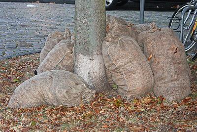 Stadt holt wieder Laubsäcke ab. Foto: cg