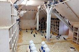 Futterstation für Tauben: Karlsruhe setzt seit vielen Jahren ein Konzept zur tierschutzgerechten Regulation der Stadttaubenpopulation um. Foto: Stadt Karlsruhe