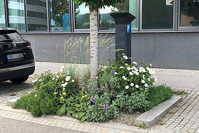Blühende Stauden und Gräser setzen schöne Akzente auf einer Baumscheibe. Foto Gartenbauamt / Stadt Karlsruhe