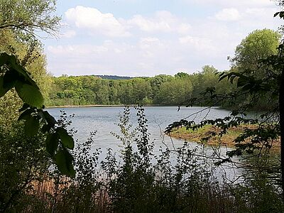 Naturschutzgebiet: Erlachsee im Oberwald. Foto: cg