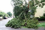 Sturmschaden, wie 2018 in der Seboldstraße. Foto: om