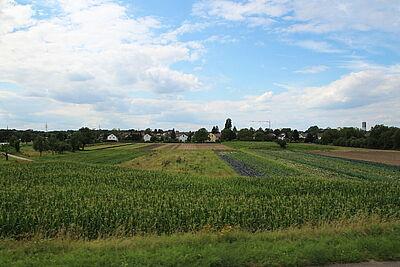 Landwirtschaftlich genutzte Flächen zwischen Aue und der B3 wären auch Teil des LSG. Foto: cg / Karte: Stadt Karlsruhe