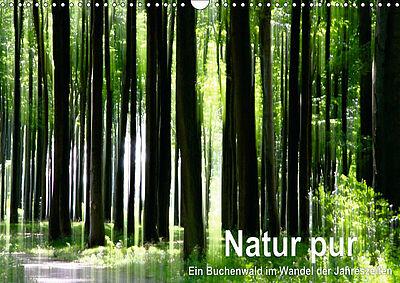 """Kalender: """"Natur pur – Ein Buchenwald im Wandel der Jahreszeiten"""". Foto: pm"""