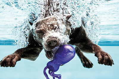 Hunde-Schwimmen im Rheinstrand Rappenwört. Foto: Timo Rettenmaier / Karlsruher Bädergesellschaft mbH
