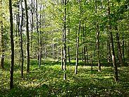 Der Oberwald ist ein beliebtes Naherholungsziel in der Region. Foto: cg