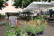 Bauernmarkt auf dem Durlacher Saumarkt. Foto: cg