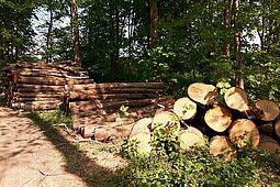 Bereits das dritte Jahr in Folge leidet der Karlsruher Wald unter massiver Trockenheit. Foto: cg