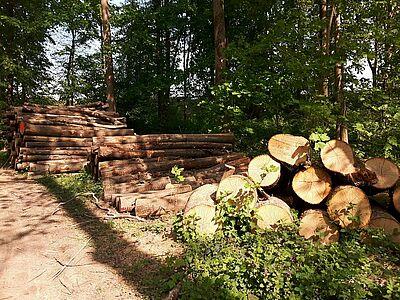 Rohholz am Sammelplatz im Oberwald. Foto: cg