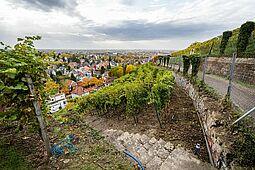 Blick aus dem Weinberg auf die Durlacher Altstadt. Foto: cg