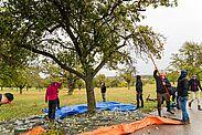 """""""Turnersaft"""": Auch der Handball-Förderverein der Turnerschaft Durlach produziert auf Streuobstflächen rund um Durlach jährlich seinen beliebten Apfelsaft. Foto: TSD"""