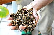 Eine echte Mutprobe: Bienen in der eigenen Hand. Foto: pm
