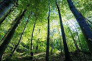 Waldbaden hat wohltuende Wirkungen  auf Körper, Geist und Seele. Foto: cg