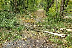 Blockierter Waldweg im Oberwald. Foto: pia