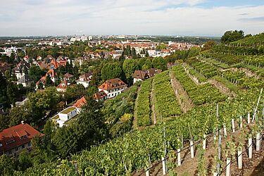 Staatsweingut Karlsruhe-Durlach. Foto: cg