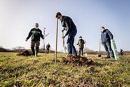 KSC-Geschäftsführer Michael Becker hebt das Erdloch für die junge Traubeneiche aus. Foto: cg