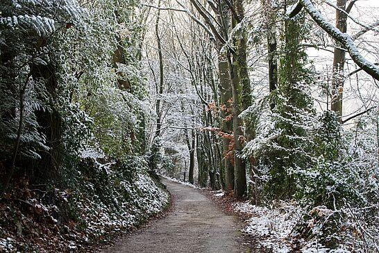 09 Spaziergang: Turmberg im Winter - Bei Sonnenschein und noch etwas Schnee auf dem Turmberg zog es uns zu einem Spaziergang hinaus. (39 Fotos)