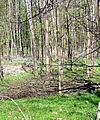 Oberwald. Foto: cg