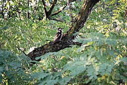 Märchen und Bäume im Oberwald. Foto: cg