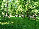 Tierpark Oberwald. Foto: cg