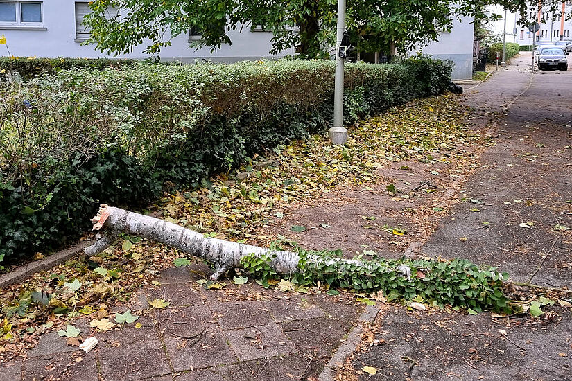 Glücklicherweise glimpflich ausgegangen: Morsche Birken konnten in der Neuensteinstraße dem Sturm nicht standhalten. Foto: cg