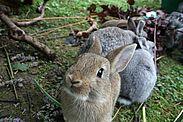 Rinder und Kaninchen vor Erregern schützen. Foto: cg