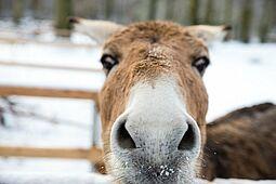 Auch die Zoo-Außenstelle im Oberwald, die zwischenzeitlich abgesperrt war, ist ab Dienstag wieder frei zugänglich. Foto: cg