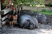 Karlsruhe sucht Tierschützer. Foto: cg