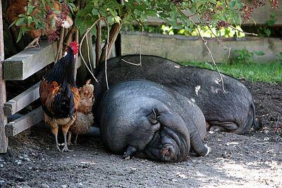 Ferien auf dem Bauernhof hilft auch den Bauern im Land, denen der Tourismus als zweites Standbein dient. Foto: cg