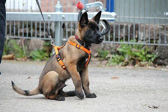 07 Infoveranstaltung des LKA und Leistungsvergleich Polizeihundeführer - Polizeihunde aus ganz Baden-Württemberg zeigten was sie drauf hatten und das LKA informierte Einbruchsschutz. (68 Fotos)