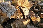 Baumfällarbeiten. Foto: cg