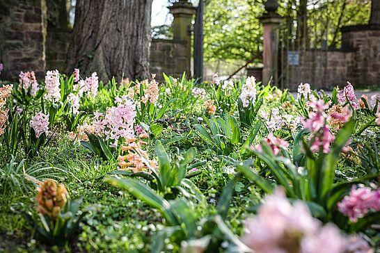 09 Spaziergang: Frühling in Durlach - Es blüht in Durlach an jeder Ecke – besonders im Schlossgarten. Wir haben eine Frühlingsrunde gedreht. (26 Fotos)