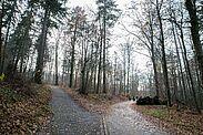Künftig sind zwei Forstbezirke für den Staatswald auf Karlsruher Gemarkung zuständig. Foto: cg