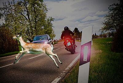 Wildunfälle vermeiden. Foto: obs/DVAG