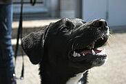 200 Euro Zuschuss können Hundehalter beantragen. Foto: cg