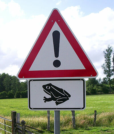 Amphibienwanderungen beginnen. Foto: Wikipedia
