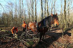Arbeitskollege Pferd schont den Wald. Foto: pia