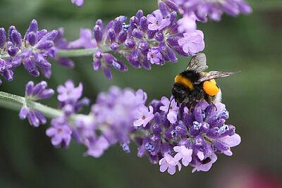 Nektarreiche Blütenpflanzen im Garten helfen den Insekten. Foto: cg