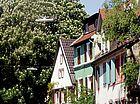 Kastanien Bienleinstorstraße
