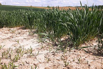 Anfang Mai in der Region: Die Böden sind deutlich zu trocken. Foto: cg