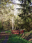 Brücke im Oberwald
