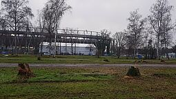 """Baumfällung auf dem """"Birkenparkplatz"""". Foto: jowaka"""