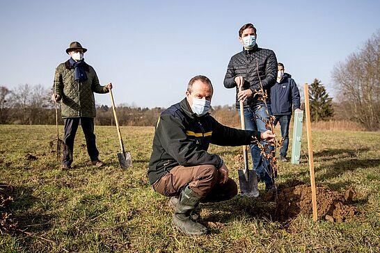 23 KSC und Stadt: Gemeinsame Pflanzaktion in Durlach - Für den Neubau des Wildparkstadions und des Birkenparkplatzes mussten Bäume weichen – eine Ersatzpflanzung fand nun in Durlach statt. (13 Fotos)
