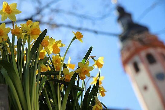21 Frühling in Durlach: Wochenmarkt - Pünktlich zum Frühlingsanfang kann man den Wochenmarkt auf dem Marktplatz bei bestem Wetter genießen. (12 Fotos)