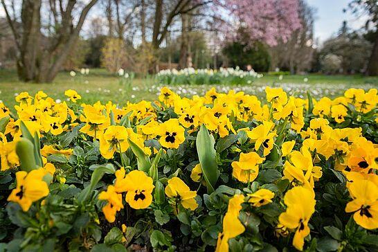 17 Frühling im Schlossgarten Durlach - Ein schöner Ort, um mit Distanz zueinander den Frühling zu genießen. (29 Fotos)