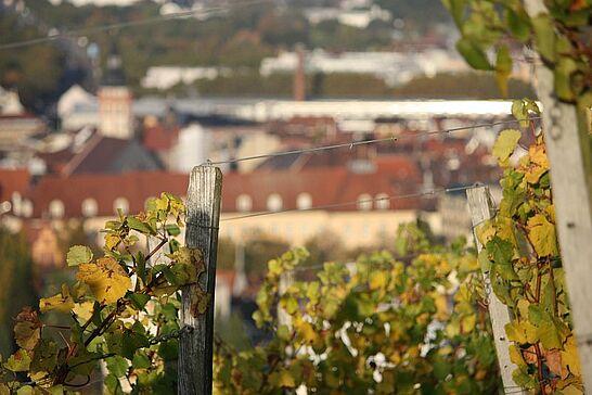 20 Herbst im Weinberg - Mit den ersten Sonnenstrahlen bietet sich vom Turmberg aus im Herbst ein herrlicher Blick auf Durlach und seine Umgebung. (59 Fotos)