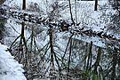 Winter 2008/09
