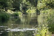 Pfinz in Durlach. Foto: cg