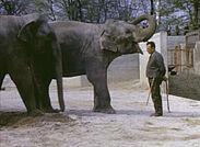 Auf Super 8 festgehalten: Elefanten im Zoo Karlsruhe. Foto: pm