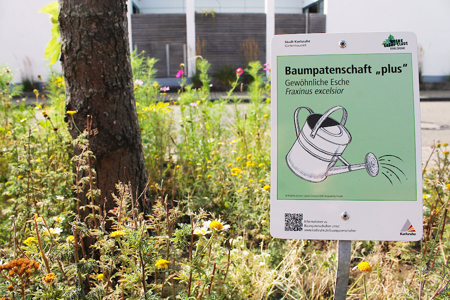 "Baumpatenschaft ""plus"" in Karlsruhe. Foto: pia"