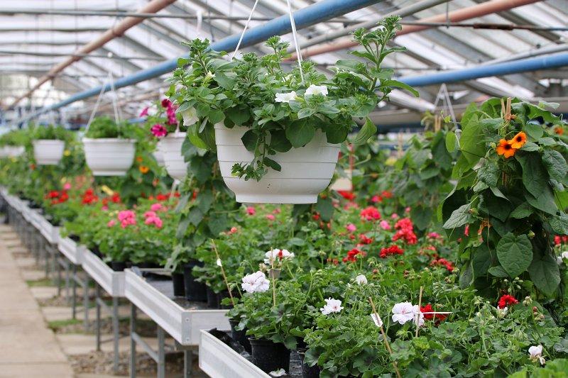 Frühling in der HWK-Gärtnerei. Auf Wunsch werden auch die Balkonkästen der Kundinnen und Kunden bepflanzt. Foto: cg